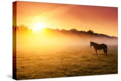 Arabian Horses Grazing on Pasture at Sundown in Orange Sunny Beams. Dramatic Foggy Scene. Carpathia-Leonid Tit-Stretched Canvas Print