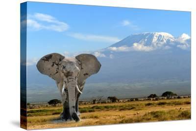 Elephant-byrdyak-Stretched Canvas Print