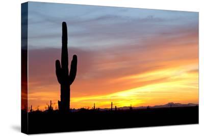Desert Sunset with Saguaro Cactus-Christina E-Stretched Canvas Print