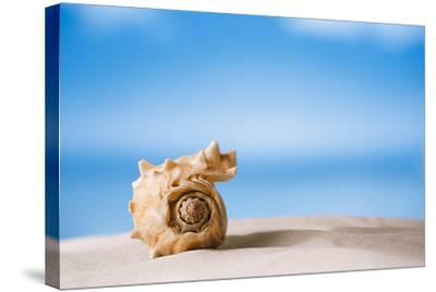 Tropical Shell on White Florida Beach Sand under Sun Light, Shallow Dof-lenka-Stretched Canvas Print