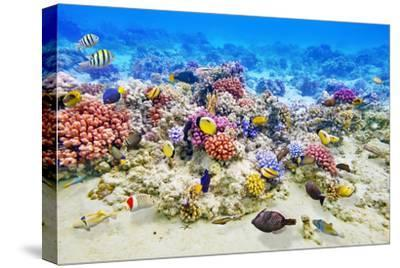 Underwater World with Corals and Tropical Fish.-Brian K-Stretched Canvas Print