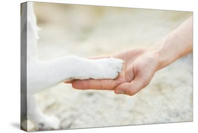 High Five Paw-Javier Brosch-Stretched Canvas Print