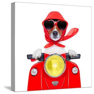 Motorcycle Dog Summer Dog-Javier Brosch-Stretched Canvas Print