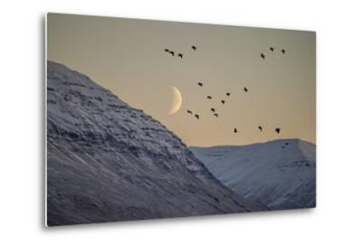 Moonlight over Snow Covered Mountain-Arctic-Images-Metal Print