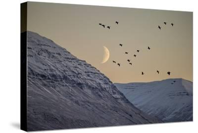 Moonlight over Snow Covered Mountain-Arctic-Images-Stretched Canvas Print