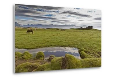 Horses Grazing by Abandon House, Vidbordssel Farm, Hornafjordur, Iceland-Arctic-Images-Metal Print