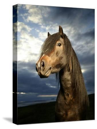 Portrait of Horse-Arctic-Images-Stretched Canvas Print