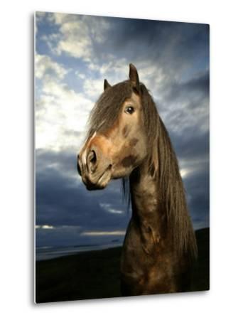 Portrait of Horse-Arctic-Images-Metal Print