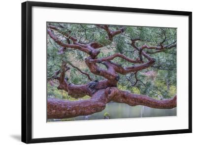 Kyoto Japan-Art Wolfe-Framed Photographic Print
