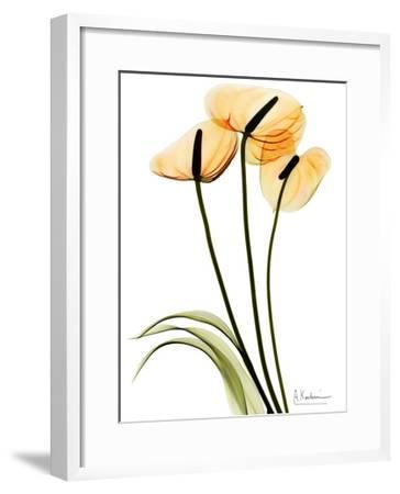 Anthurium Portrait-Albert Koetsier-Framed Premium Giclee Print