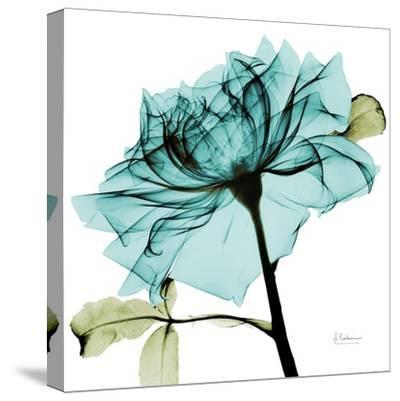 Teal Rose 2-Albert Koetsier-Stretched Canvas Print