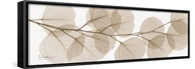 Sepia Kaluptos eucalyptus-Albert Koetsier-Framed Stretched Canvas Print