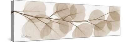 Sepia Kaluptos eucalyptus-Albert Koetsier-Stretched Canvas Print