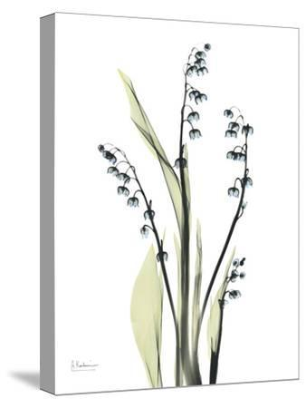 Lily of the Valley-Albert Koetsier-Stretched Canvas Print