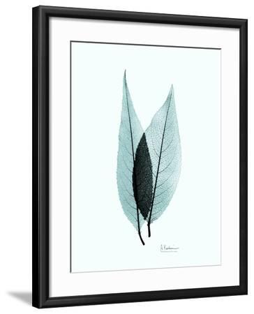 Teal Caplulin Cherry-Albert Koetsier-Framed Premium Giclee Print