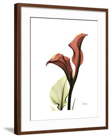 Ruby Calla Lily-Albert Koetsier-Framed Premium Giclee Print