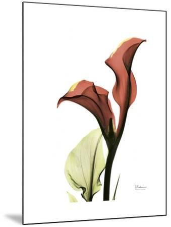 Ruby Calla Lily-Albert Koetsier-Mounted Premium Giclee Print