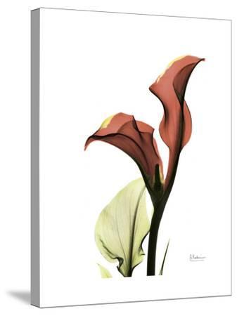 Ruby Calla Lily-Albert Koetsier-Stretched Canvas Print