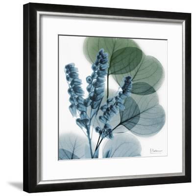 Lilly of Eucalyptus-Albert Koetsier-Framed Premium Giclee Print