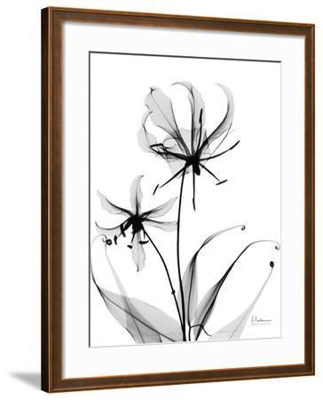 Gloriosa Lily-Albert Koetsier-Framed Art Print