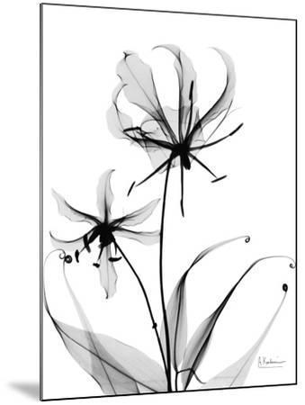 Gloriosa Lily-Albert Koetsier-Mounted Art Print