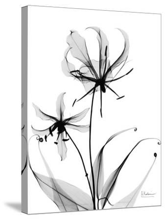 Gloriosa Lily-Albert Koetsier-Stretched Canvas Print