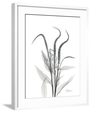 Wind Zip-Albert Koetsier-Framed Art Print