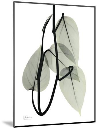 Pot Hos Leaf Portrait-Albert Koetsier-Mounted Art Print