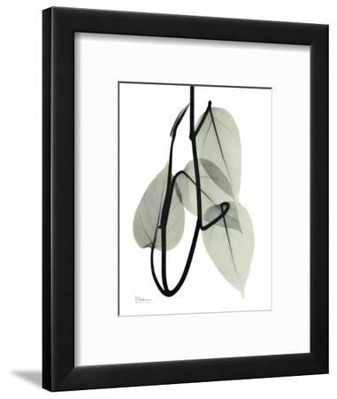 Pot Hos Leaf Portrait-Albert Koetsier-Framed Art Print
