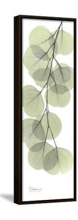 Eucalyptus Branch Down-Albert Koetsier-Framed Stretched Canvas Print