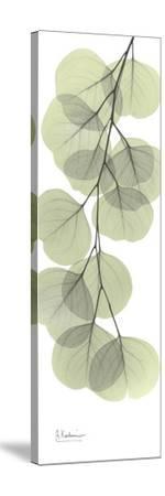 Eucalyptus Branch Down-Albert Koetsier-Stretched Canvas Print