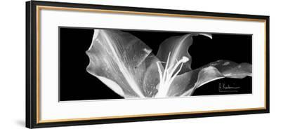 Lily 1-Albert Koetsier-Framed Premium Giclee Print