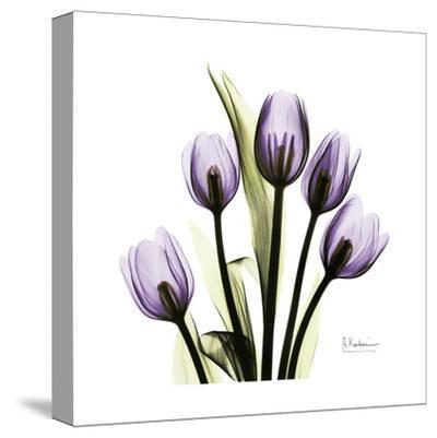Tulip in Purple-Albert Koetsier-Stretched Canvas Print