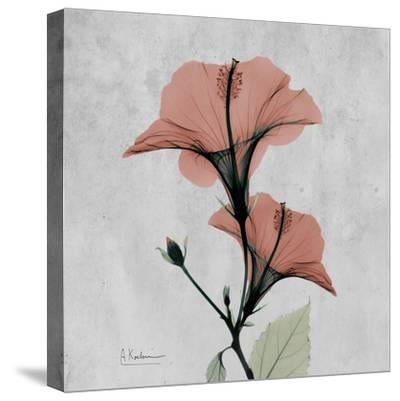 Hibiscus Marsala-Albert Koetsier-Stretched Canvas Print