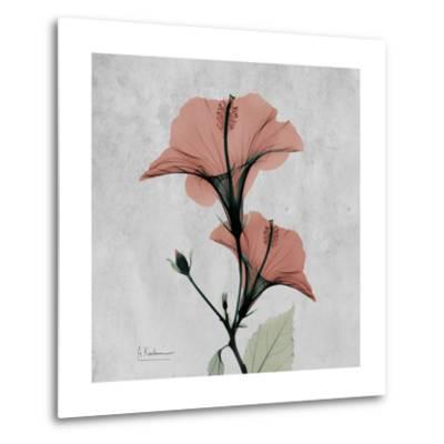 Hibiscus Marsala-Albert Koetsier-Metal Print