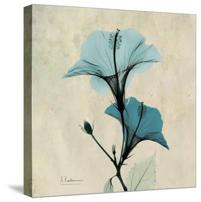 Hibiscus Moment-Albert Koetsier-Stretched Canvas Print