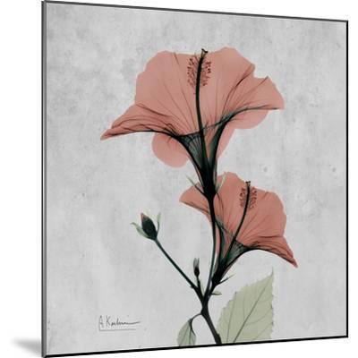 Hibiscus Marsala-Albert Koetsier-Mounted Premium Giclee Print