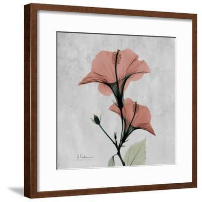 Hibiscus Marsala-Albert Koetsier-Framed Premium Giclee Print