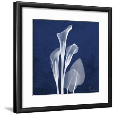 Three Indigo Calla Lilies-Albert Koetsier-Framed Premium Giclee Print