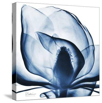 Magnolia Indigo-Albert Koetsier-Stretched Canvas Print