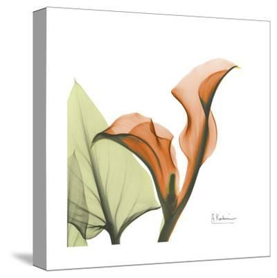 A Gift of Calla Lilies in Orange-Albert Koetsier-Stretched Canvas Print