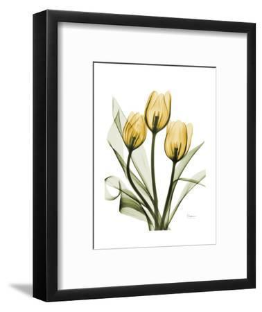 Golden Tulips-Albert Koetsier-Framed Art Print