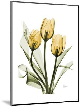 Golden Tulips-Albert Koetsier-Mounted Premium Giclee Print