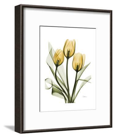 Golden Tulips-Albert Koetsier-Framed Premium Giclee Print
