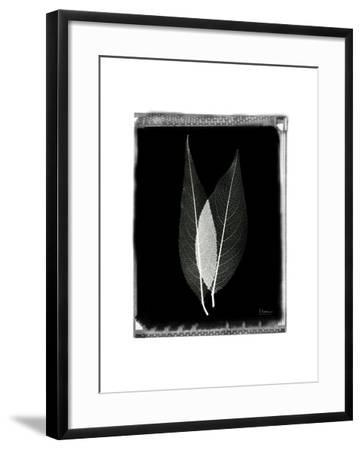 Caplulin Cherry Star-Albert Koetsier-Framed Art Print