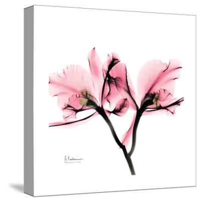 Soft Pink Orchid-Albert Koetsier-Stretched Canvas Print
