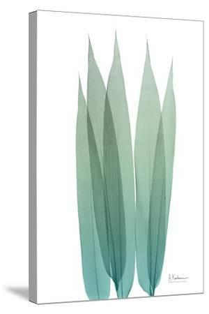 Radiant Bamboo Leaf 1-Albert Koetsier-Stretched Canvas Print