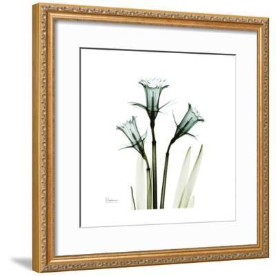 A Daffodil Day-Albert Koetsier-Framed Premium Giclee Print