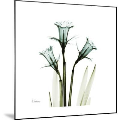 A Daffodil Day-Albert Koetsier-Mounted Premium Giclee Print
