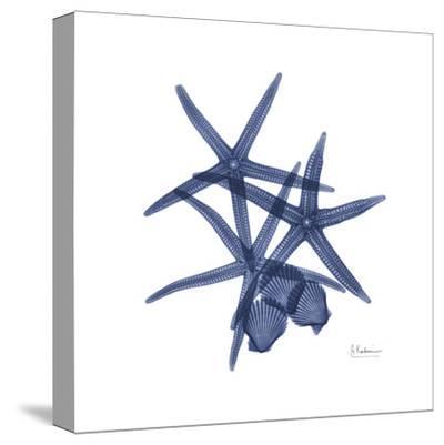 Sea Life in Blue-Albert Koetsier-Stretched Canvas Print